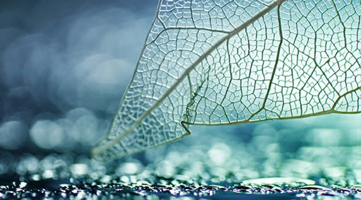 Picture of a translucent leaf